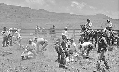 Paniolo films keep heritage alive